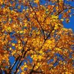 autumn-63271__180