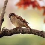 sparrow-9950__180
