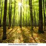 stock-photo-autumn-forest-trees-nature-green-wood-sunlight-backgrounds-128768312