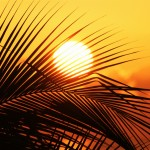 sun-of-jamaica-910070